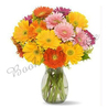Send Flowers in India, Send Gifts, FREE Delivery in India | Book My Rose