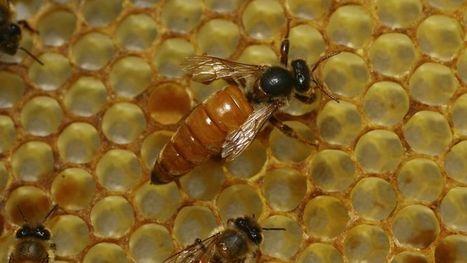 La production de miel atteint son plus bas niveau historique | Veille développement durable | Scoop.it