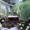 Koi ponds and Water Gardens Falls water ways fish-pond Land scaping.