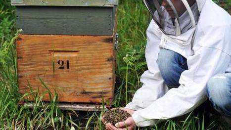Les apiculteurs s'unissent face à la disparition des abeilles | Abeilles, intoxications et informations | Scoop.it