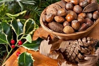 Pourquoi manger des noix et des amandes?   Bien-Être, Santé et Energie   Scoop.it