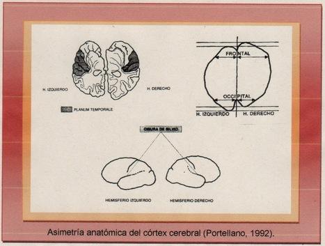 Latido cerebral lado izquierdo