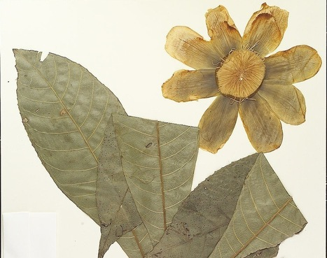 New York Botanical Garden Digitizes Biodiversity History   Botany teaching & cetera   Scoop.it