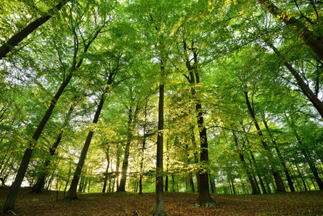 Trees Reduce Air Pollution, Respiratory Problems   ApocalypseSurvival   Scoop.it