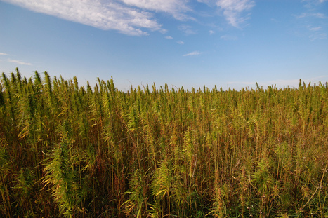 Hemp is having its moment. Meet the miracle plant's biggest champion | Coffee Party News | Scoop.it