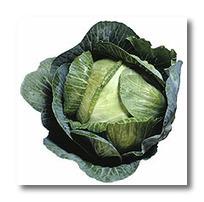 Watch Your Garden Grow: Grow Cabbage | Vegetable Gardening Resources | Scoop.it