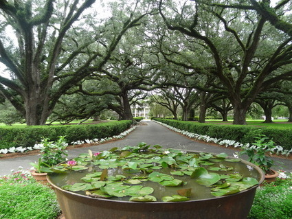 A snapshot of life on the Mississippi in the mid to late 1800's | Oak Alley Plantation: Things to see! | Scoop.it