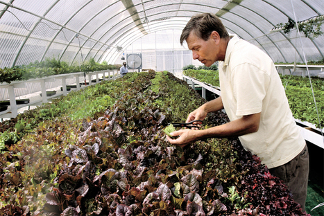 Local growers give up the dirt on hydroponics | Daily Sparks (NV) Tribune | CALS in the News | Scoop.it