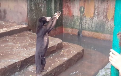 Urgent! Sign This Petition to Shut Down Indonesian Zoo Where Animals are Starving #animalcruelty | Messenger for mother Earth | Scoop.it