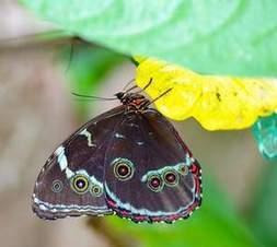 Bioéconomie, biotechnologies, biomimétisme : de quoi parle-t-on ? - Ministère du Développement durable   Responsabilité sociale des entreprises (RSE)   Scoop.it