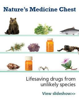A Bitter Pill | Conservation Magazine | Nature + Economics | Scoop.it