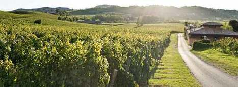 Britain Turns its Back on Champagne | Vitabella Wine Daily Gossip | Scoop.it