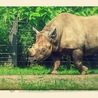 Rhino Crash Daily