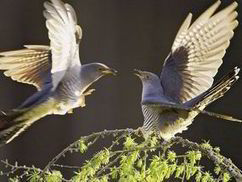UK dawn chorus is dying out as bird numbers decrease at an alarming rate | Biodiversity IS Life  – #Conservation #Ecosystems #Wildlife #Rivers #Forests #Environment | Scoop.it