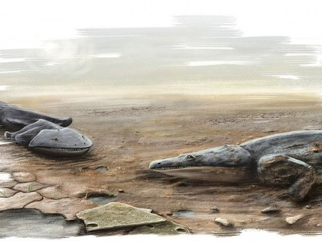 Giant ancient amphibian was bigger than a human | Amazing Science | Scoop.it