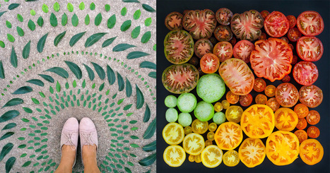 Color Coded Food and Flowers Photographed by Emily Blincoe | Art is where you see it | Scoop.it