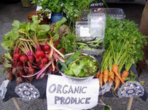 Stanford Scientists Shockingly Reckless on Health Risk And Organics   YOUR FOOD, YOUR ENVIRONMENT, YOUR HEALTH: #Biotech #GMOs #Pesticides #Chemicals #FactoryFarms #CAFOs #BigFood   Scoop.it