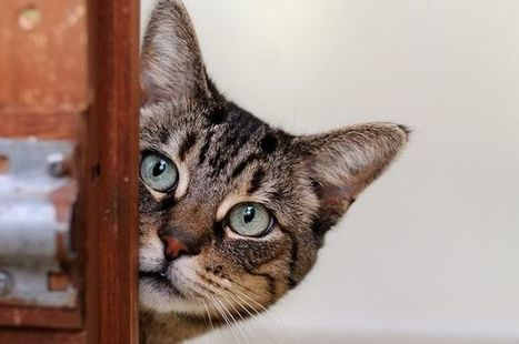 PETA sends schools humane-education kits after cat attacks:Instilling empathy in children | Empathy and Animals | Scoop.it