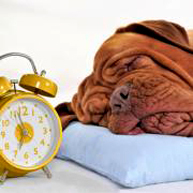 "Daylight Saving Time: How ""Falling Back"" Can Mess With Your Dog's Head 