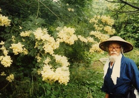 Agricultura natural: Los principios de Masanobu Fukuoka - Conciencia Eco | Permacultura y autosuficiencia | Scoop.it