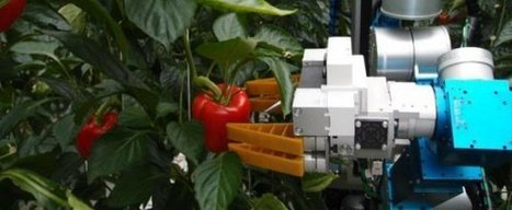 World's first pepper-picking robot heralds new era   Horizon Magazine - European Commission   Agriculture,Urban Farming,Food security,Agriprenuership, Youth, Ag Journalism and  Online Ag media   Scoop.it