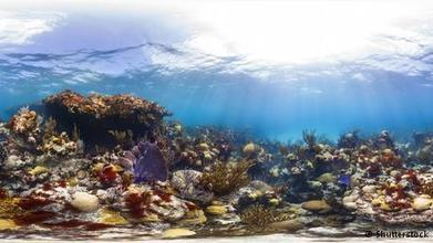 'If we don't change now we will lose the reefs' | Environment | DW.DE | 20.08.2014 | All about water, the oceans, environmental issues | Scoop.it
