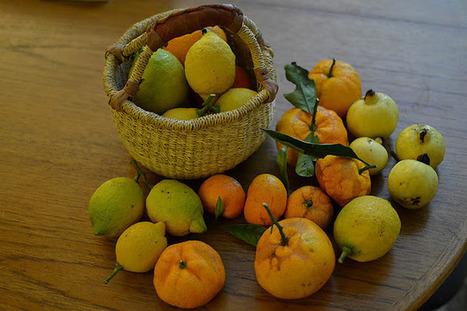 Comida y Olas: Harvest Monday 1.22.12 | mexicanismos | Scoop.it