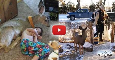 VIDEO: Officers Declare Family's Beloved Pet Deer 'Illegal' — Promptly Kill it In Front of Them | Community Village Daily | Scoop.it