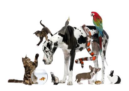 Location saisonnière en compagnie d'un animal familier : oui obligatoire | L'espace info pro des offices de tourisme de Bièvre-Valloire | Scoop.it