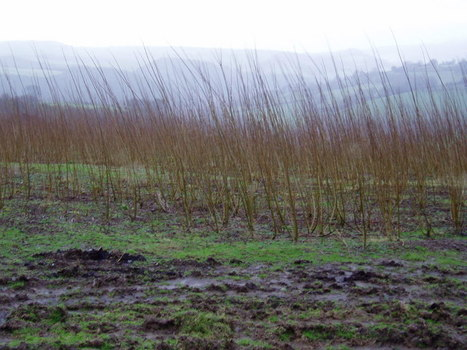 Is biomass the next biofuel controversy?   Reforming Europe's Common Agricultural Policy   Scoop.it