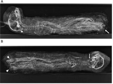 Ancient Egyptians Bred Kittens Specifically for Mummification Say Researchers | Ancient Egypt and Nubia | Scoop.it