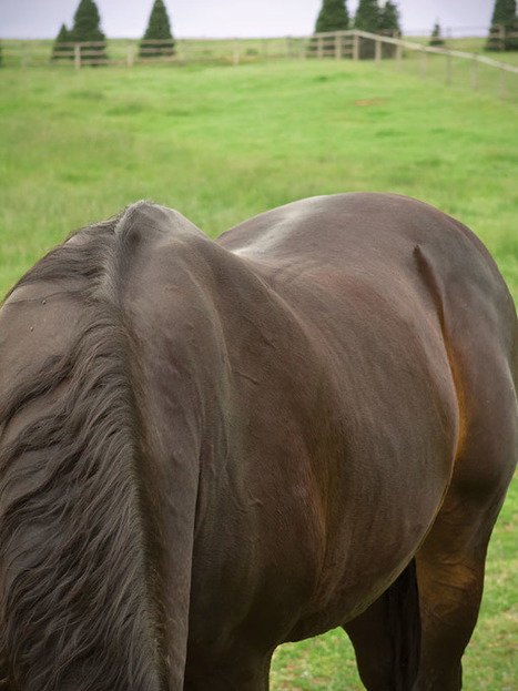 Oh, My Aging Back | Equine matters | Scoop.it