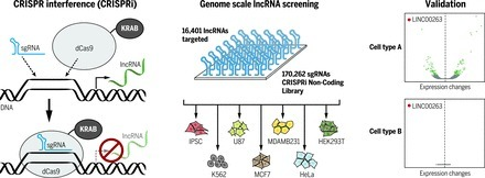 CRISPRi-based genome-scale identification of functional long noncoding RNA loci in human cells | SynBioFromLeukipposInstitute | Scoop.it
