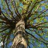 Bonds Tree Work