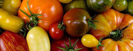 Tomato Varieties Database | Vegetable Gardening Resources | Scoop.it