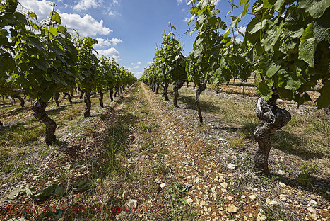 Want To Buy A Vineyard In France? Here's How Much It Costs - ForbesLife | In The Vineyard | Scoop.it