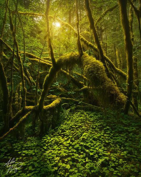 Verdant Grove | Great Photographs | Scoop.it