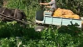 Découverte : la permaculture, une solution à la crise agricole ? | Planète Paléo | Scoop.it