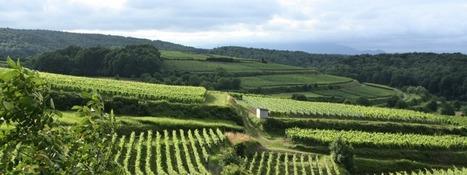 80 000 euros et  20 jours de conseil pour vous installer en tant que vigneron | Le commerce du vin, entre mythe et réalité | Scoop.it
