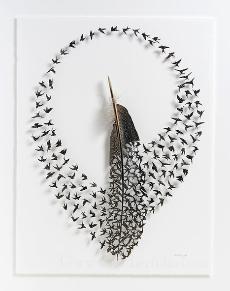 Exquisite New #Cut #Feather Shadowbox Artworks by Chris Maynard. #art | Nature Flash | Scoop.it
