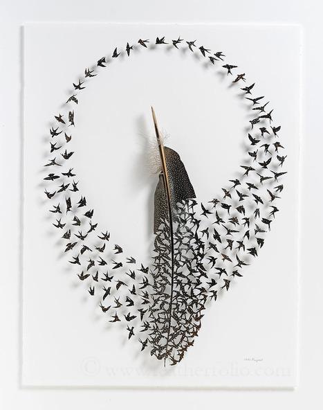 Exquisite New #Cut #Feather Shadowbox Artworks by Chris Maynard. #art | Art-Arte-Cultura | Scoop.it