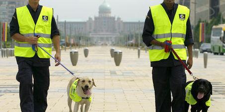 Les chiens de garde de Kuala Lumpur   CaniCatNews-actualité   Scoop.it