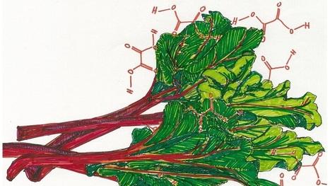 When Edible Plants Turn Their Defenses On Us   Botany teaching & cetera   Scoop.it