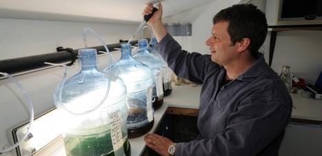 Ses cultures d'oursins pourraient repeupler le Golfe du Morbihan | Développement durable en France | Scoop.it