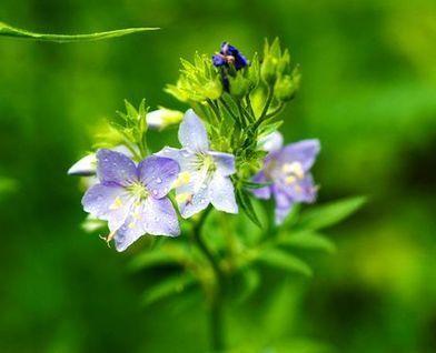 Study: Hundreds of Japanese plants may go extinct over next century - AJW by The Asahi Shimbun | Réseau Tela Botanica | Scoop.it