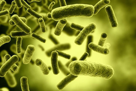 Why Gas Pumps Spread Disease More than Anything Else   Yahoo! Finance   CALS in the News   Scoop.it