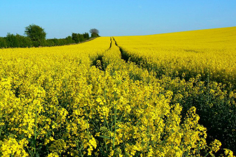 Researchers revise 'overestimated' biofuels subsidies   Reforming Europe's Common Agricultural Policy   Scoop.it