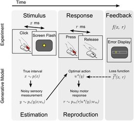 Internal Representations of Temporal Statistics and Feedback Calibrate Motor-Sensory Interval Timing | Social Foraging | Scoop.it