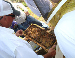 Studies link pesticides to plunging bee populations | Colony Collapse Disorder | Scoop.it