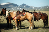 American Endurance Ride Conference Reaffirms Open Endurance Records   Endurance Riding   Scoop.it